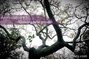Appreciation #3: Allowing new growth