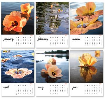 Tropical Hibiscus Calendar 2017