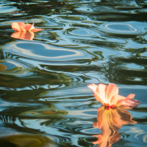 Purau Flowers on Reflection – Tahiti – fine art print