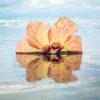 Hibiscus in Tahiti